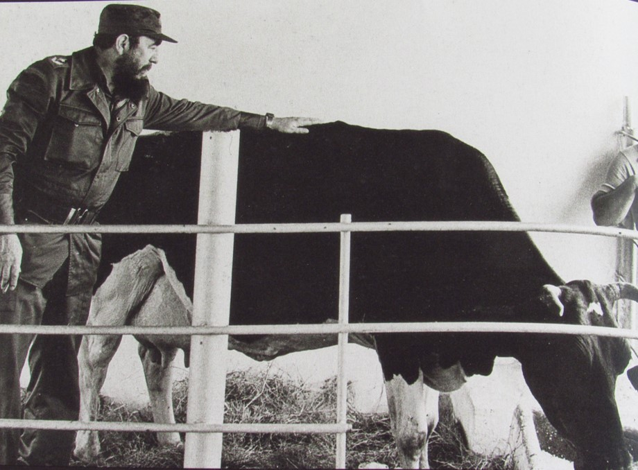 Junto a la vaca Ubre Blanca. 1975